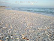 Sanibel's numerous shells